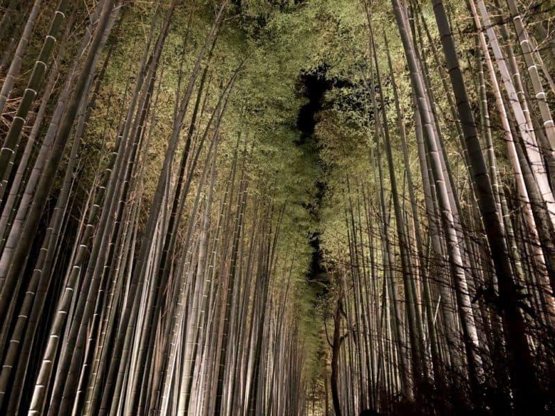 嵐山の竹林2