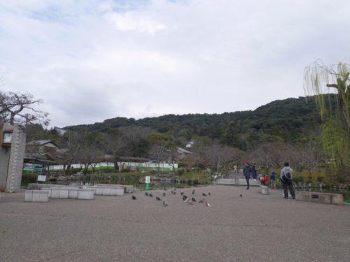 円山公園もさびしい