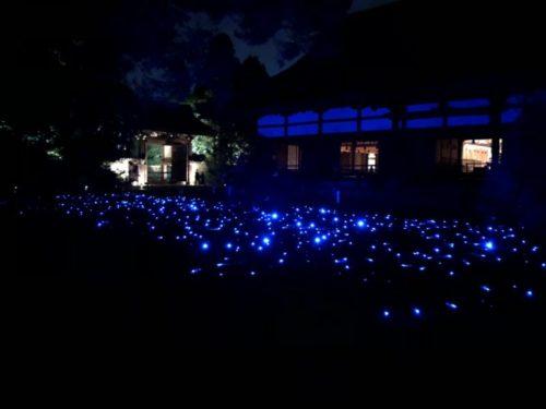 青蓮院のLEDライトが埋め込まれた庭園
