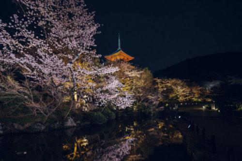 清水寺の春の夜間特別拝観