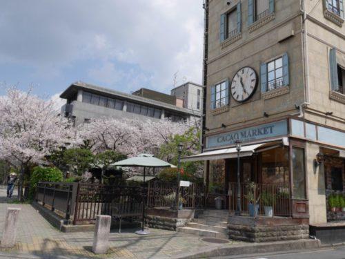 カカオマーケットの後ろに見える桜