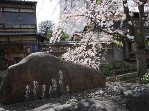 かにかくに碑と桜