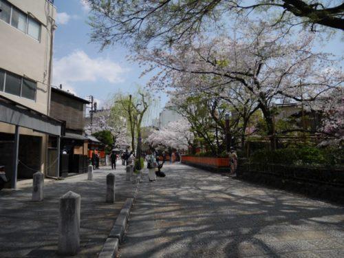 春の祇園白川