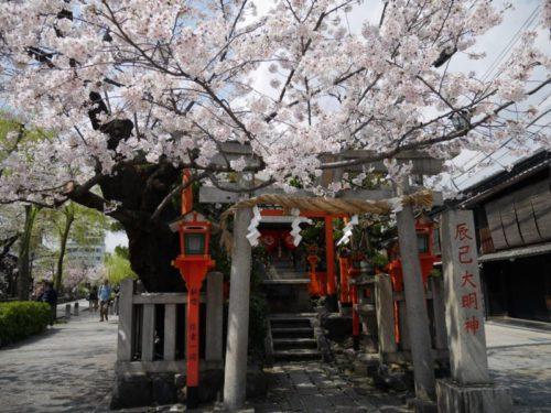 辰巳大明神と桜