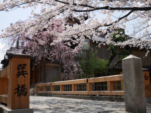祇園巽橋と桜