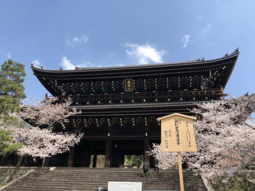知恩院の三門前で桜を鑑賞する
