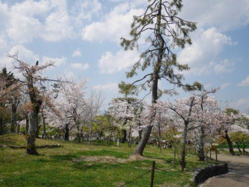丸山公園の奥のようす2020年春