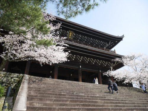 知恩院三門と桜がきれい