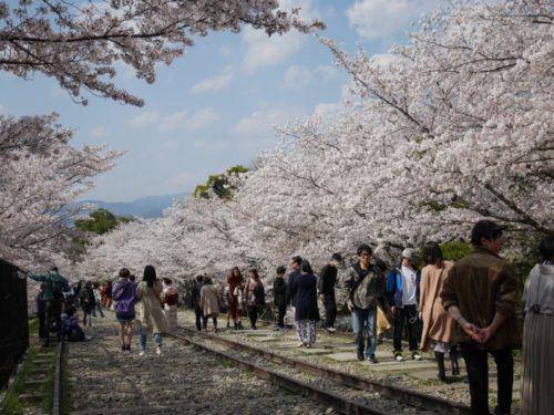 桜の木と蹴上のインクライン