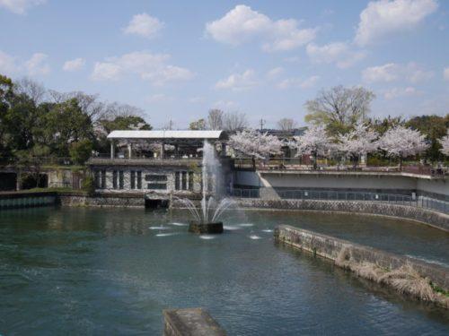 琵琶湖疎水の噴水がきれい