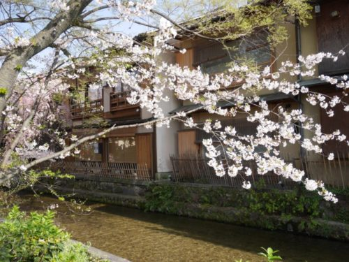 白川と町家と桜