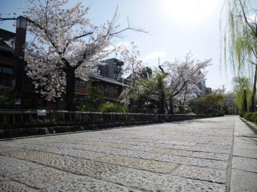 満開の桜と祇園白川