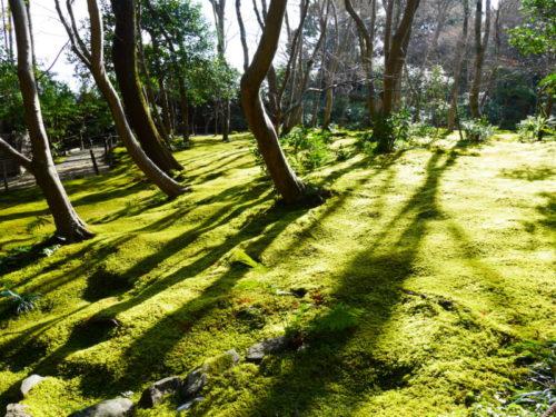 苔が美しい祇王寺