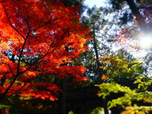 南禅寺の美しい紅葉2020年11月15日