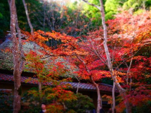 茅葺き屋根と紅葉のコラボ